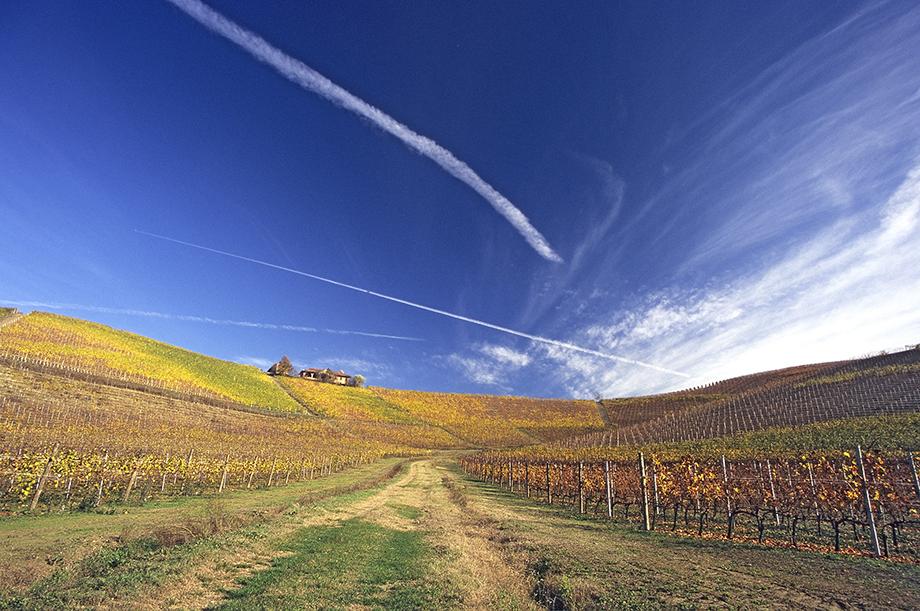 Vignoble à Gallareto