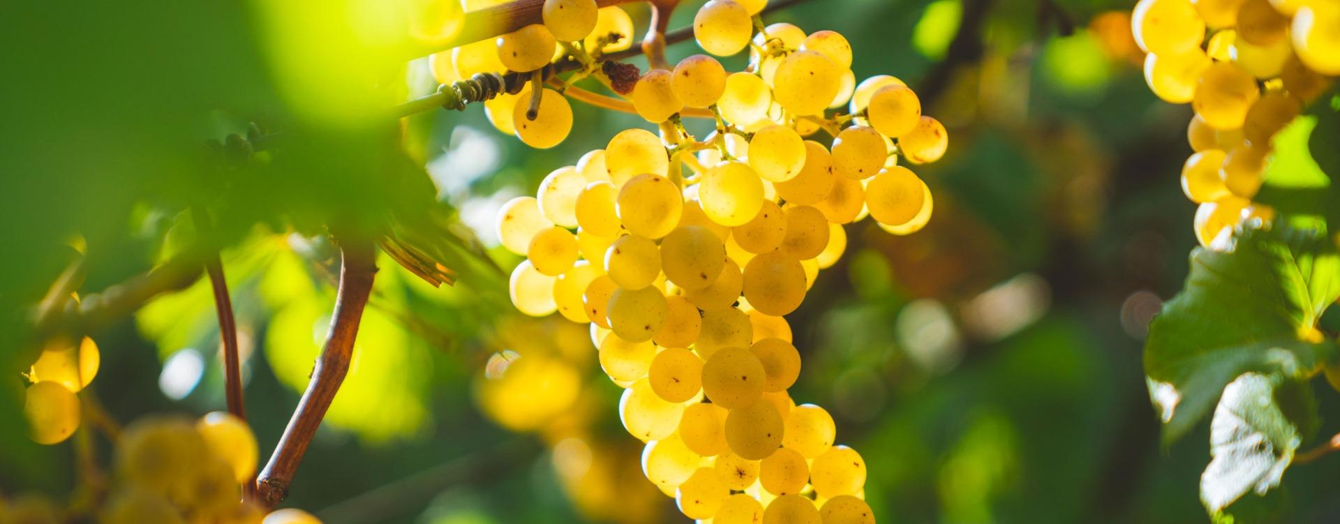 Das Weinhaus Obrist
